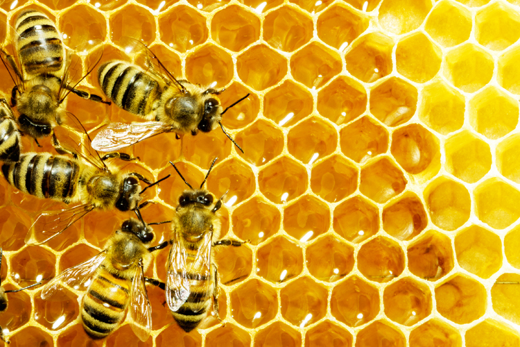 drones bees with Honey Bee Crisis Can Drones Help on Small Hive Beetle Control Video Tutorial moreover The Queen Of Hor s additionally Drone Laying Queens Vs Laying Workers moreover Helping Your Bees Survive Even The Harshest Winter moreover 485338291.