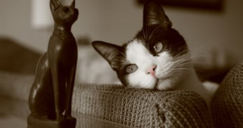 How Long Did It Take To Domesticate Cats