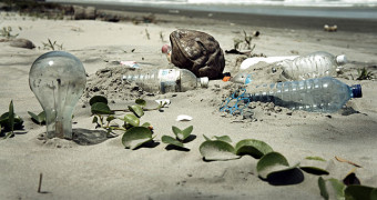 water pollution on the beach