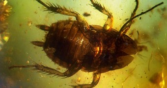 Cockroach preserved in amber